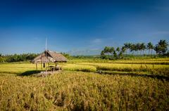 Indonesia, Lombok, Straw hut in rice paddy Stock Photos