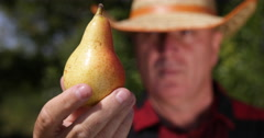 Gardner Showing Camera Ripe Pear Sweet Delicious Autumn Farm Fruit Closeup View Stock Footage