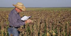 Research Activity Agronomist Notes Agenda Data Observation Sunflower Crop Field Stock Footage