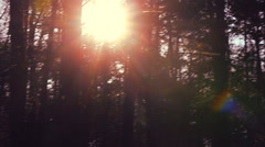 Forest in autumn with sunset light Stock Footage