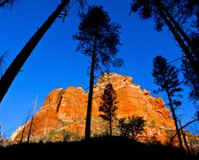 Low angle view of a mountain from beneath the Ponderosa Pine trees along the Stock Photos