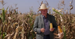 Farmer Talking Food Agriculture Industry Ripe Corn Field Maize Crop Harvest Stock Footage