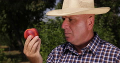Peasant Cultivator Examining Nectarine Fruit Flavored Juicy Beautiful Red Peach Stock Footage