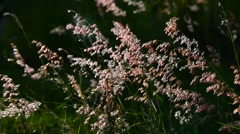 Flower grass movement with wind Stock Footage