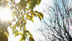 Autumn : Yellow foliage VS nude branches - sun through the leaves - zoom in - stock footage