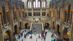Natural History Museum, Main Hall - stock footage