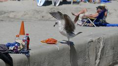sea gull stealing snacks at beach - stock photo