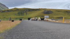 ICELAND Rettir sheep Schaf shepherd Stock Footage