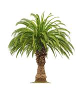 Stock Photo of Palm on white background