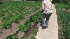 The boy in the Garden watering water the young shoots of potatoes - stock footage