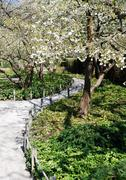 Shady path between flowering trees Stock Photos