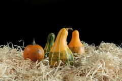 Gourds on wood chippins - stock photo