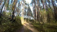 Forest Harvester in action - cutting down tree. A specialized Feller Buncher saw Stock Footage