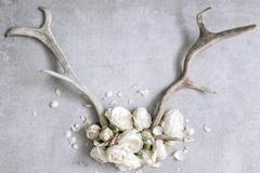 Antlers with white peonies Stock Photos