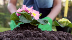 Mid section of a woman gardening Stock Footage