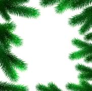 Christmas fir tree branches - stock illustration