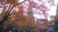 Red autumnal leaves,tourists in xiangshan mountain beijing Stock Footage