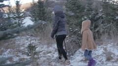 Christmas Tree farm Stock Footage
