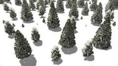 Flight over snowy winter fir forest - stock illustration