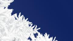 Frosty fir branches on a dark blue background - stock illustration