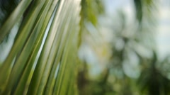 Glare of the sun streaming through palm leaves Stock Footage