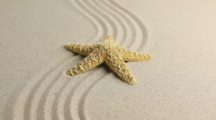 Approximation of starfish lying on the sand Stock Footage