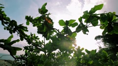 Glare of sun streaming through leaves of trees Stock Footage