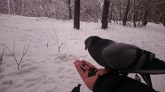 Pigeons eat seeds from a hand. Winter park. Pov. Stock Footage