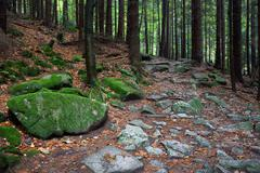 Rocky Trail in Mountain Forest Stock Photos