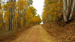 POV-Driving rough mountain road bright golden aspen leaves line the trail Stock Footage