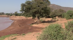 Grant's Gazelle herd walk on riverbank in Samburu. Stock Footage