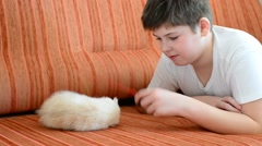 Teenage boy playing with a kitten on  couch Stock Footage