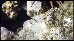 Red sea underwater coral reef Stock Footage