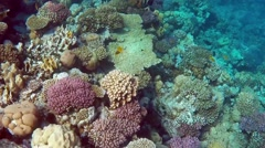 Red sea underwater coral reef Stock Footage