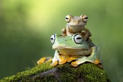 Small frog sitting on another frog - stock photo