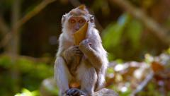 Abstract Timelapse Video of a Monkey Sitting on a Rock Stock Footage