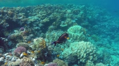 red sea underwater coral reef - stock footage