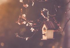 Robin nesting in a Bird house in a almond tree Stock Photos
