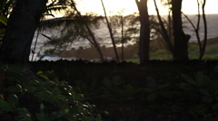 Tropical foliage in silhouette along the Maui coastline Stock Footage