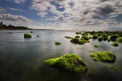 Moss covered rocks at the beach, West Nusa Tenggara, Indonesia - stock photo