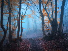 Magic autumn forest in fog. Beautiful natural landscape. Stock Photos