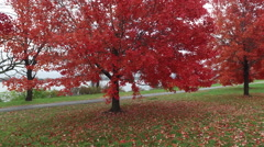 Fall leaves in Washington DC along the Potomac Stock Footage