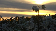sunset, MCU cotton balls Stock Footage