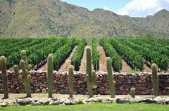 Vineyard, Cafayate, Salta, Argentina Stock Photos