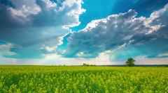 4K Canola field and dramatic sky, time-lapse Stock Footage