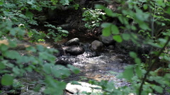 Stock Video Footage of Small Creek Running Shot Through Green Leaves