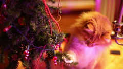 Cat playing with play christmas tree Stock Footage