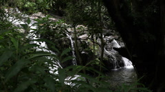 Small waterfall through trees in Maui Stock Footage