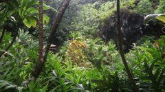 Overlooking a tropical area near a swimming hole Stock Footage