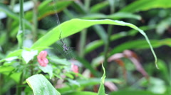 Yellow garden spider on a web crawls out of frame Stock Footage